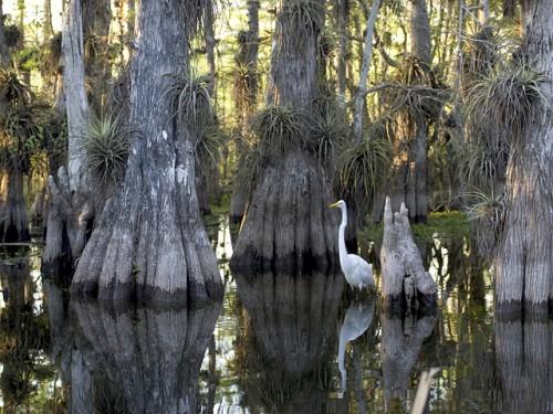 Национальный парк Эверглейдс (Флорида, США)