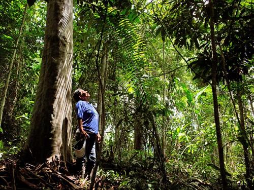 Джунгли Тахуаману (Перу)
