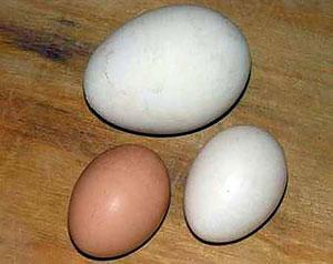 Яйцо-гигант из Солигорска