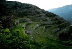 Вина Кипра
