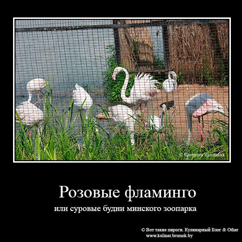 Розовые фламинго в минском зоопарке