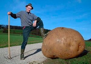 Картофельная статистика