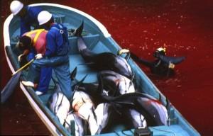 Мясо дельфинов