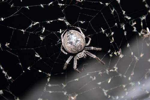 Наше местообитания в прямом смысле атаковали пауки