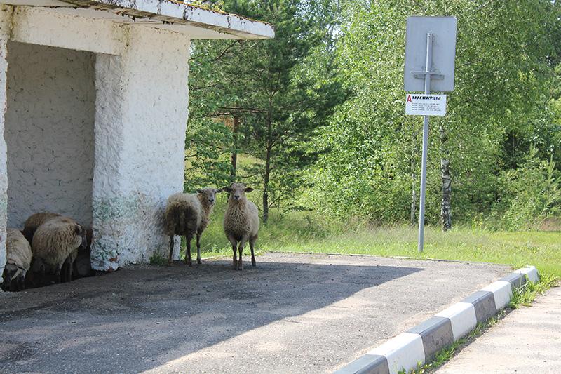 По дороге с Слободку увидел вот таких необычных пассажиров. Надеюсь, что они успели на свой автобус