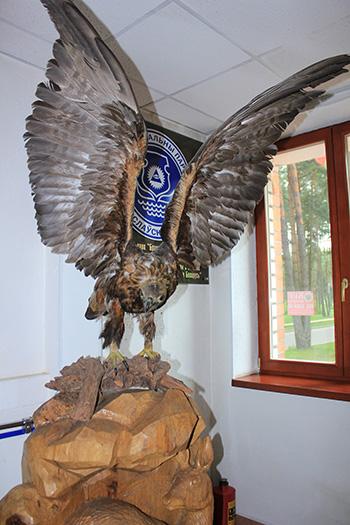 Вот такой благородный символ национального парка стоит сразу при входе в конторе. Меня радует одно - это самые крупные хищные птица на территории Беларуси